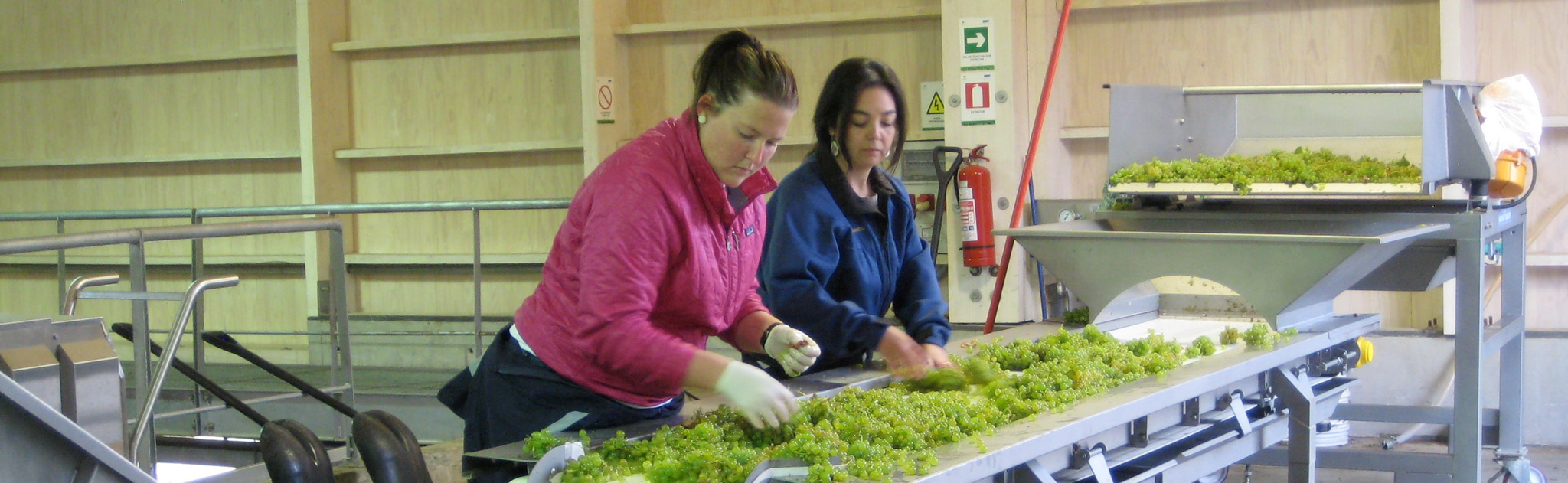 2011 Intern, Whitney Ulvestad, sorting grapes with Evelyn Vidal