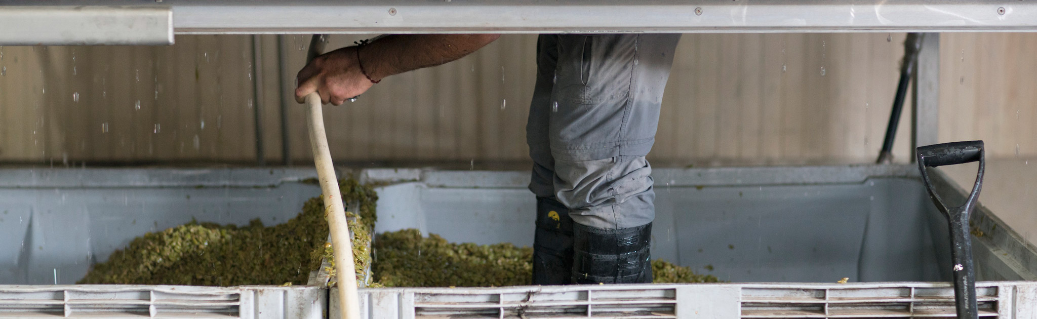 Our cellar master, Manuel, inside the press cleaning out the skins from our freshly pressed Sauvignon Blanc.