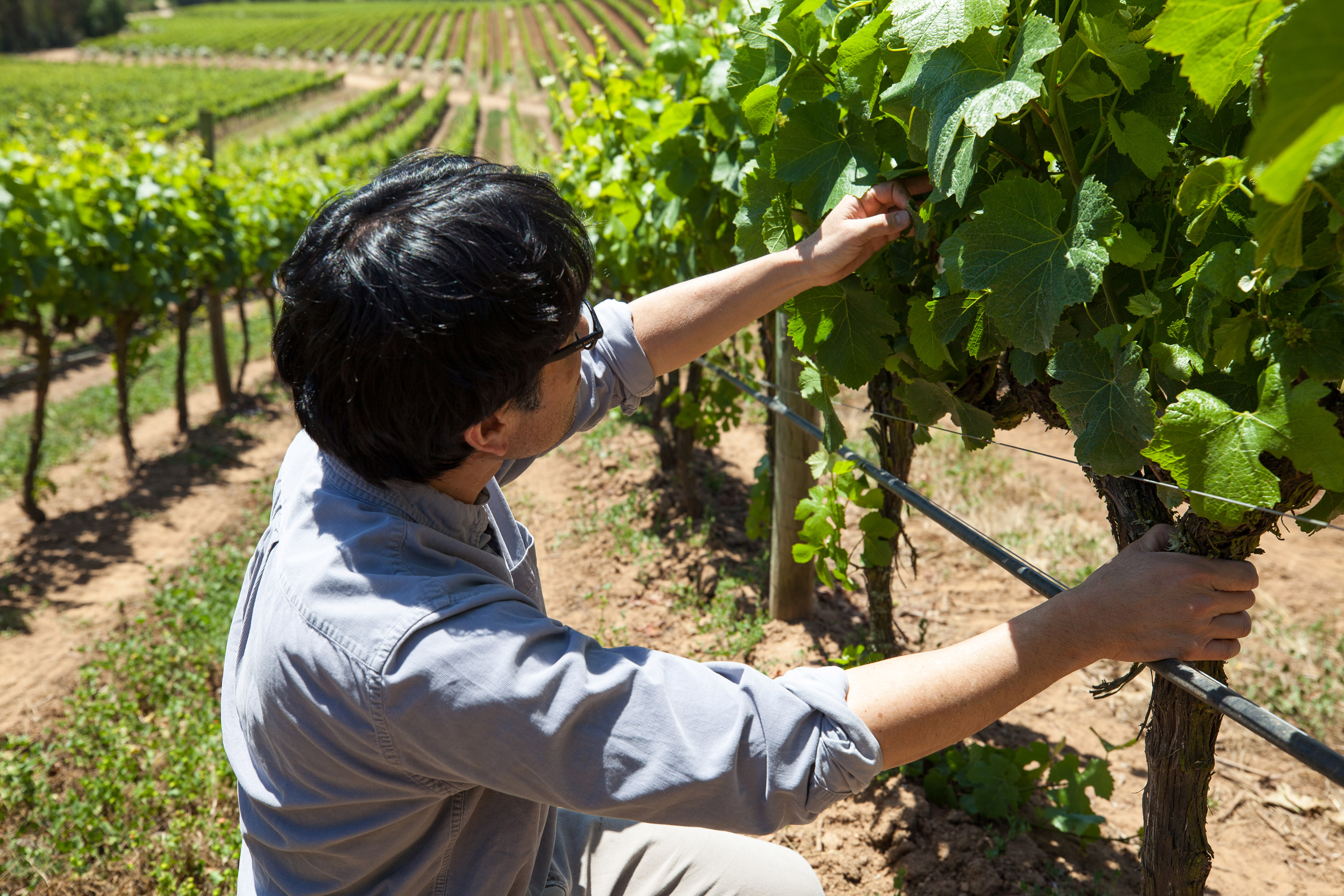 Byron inspecting vines during a routine vineyard check this past spring.