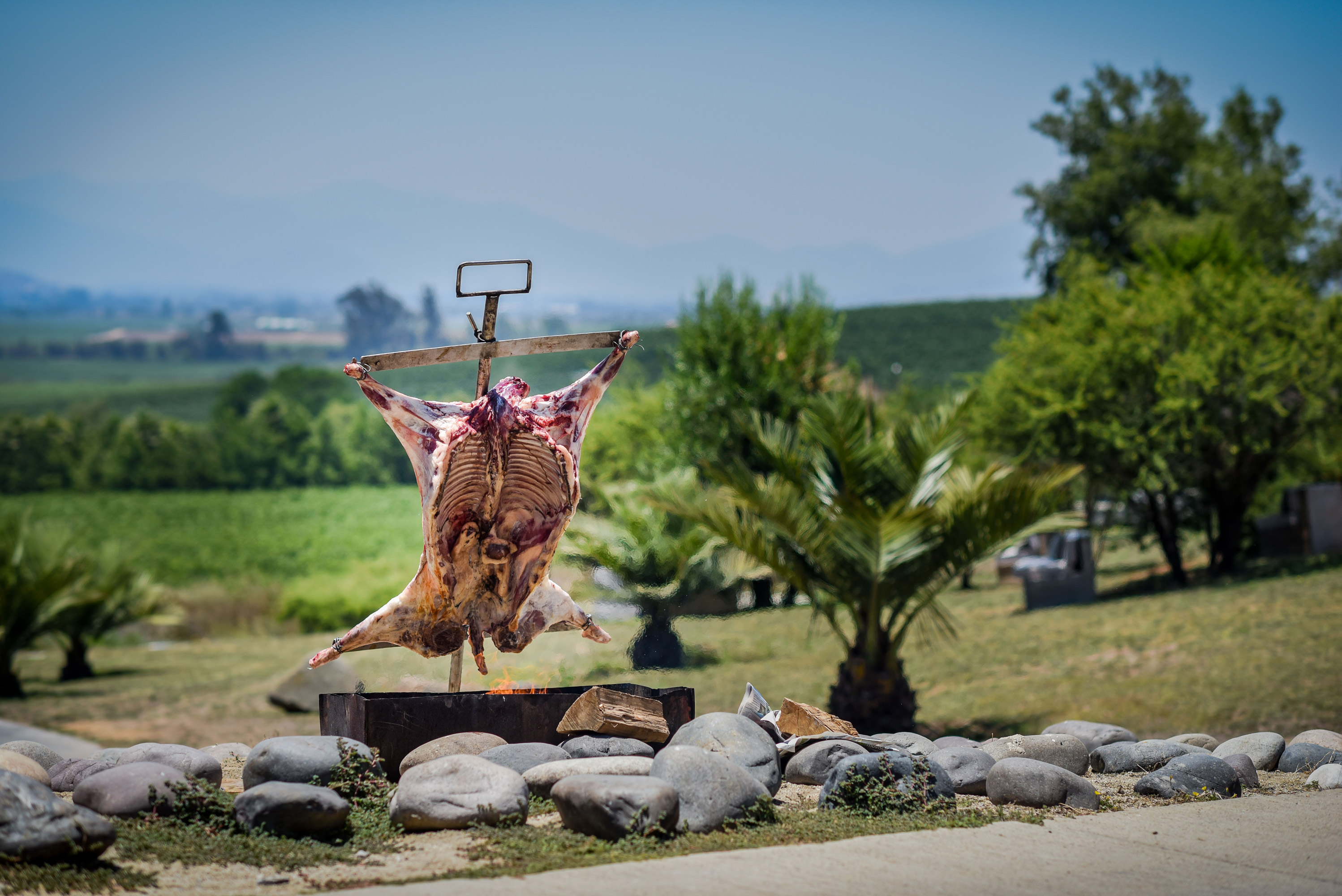 Cordero al palo or roasted lamb with the winery in the background.