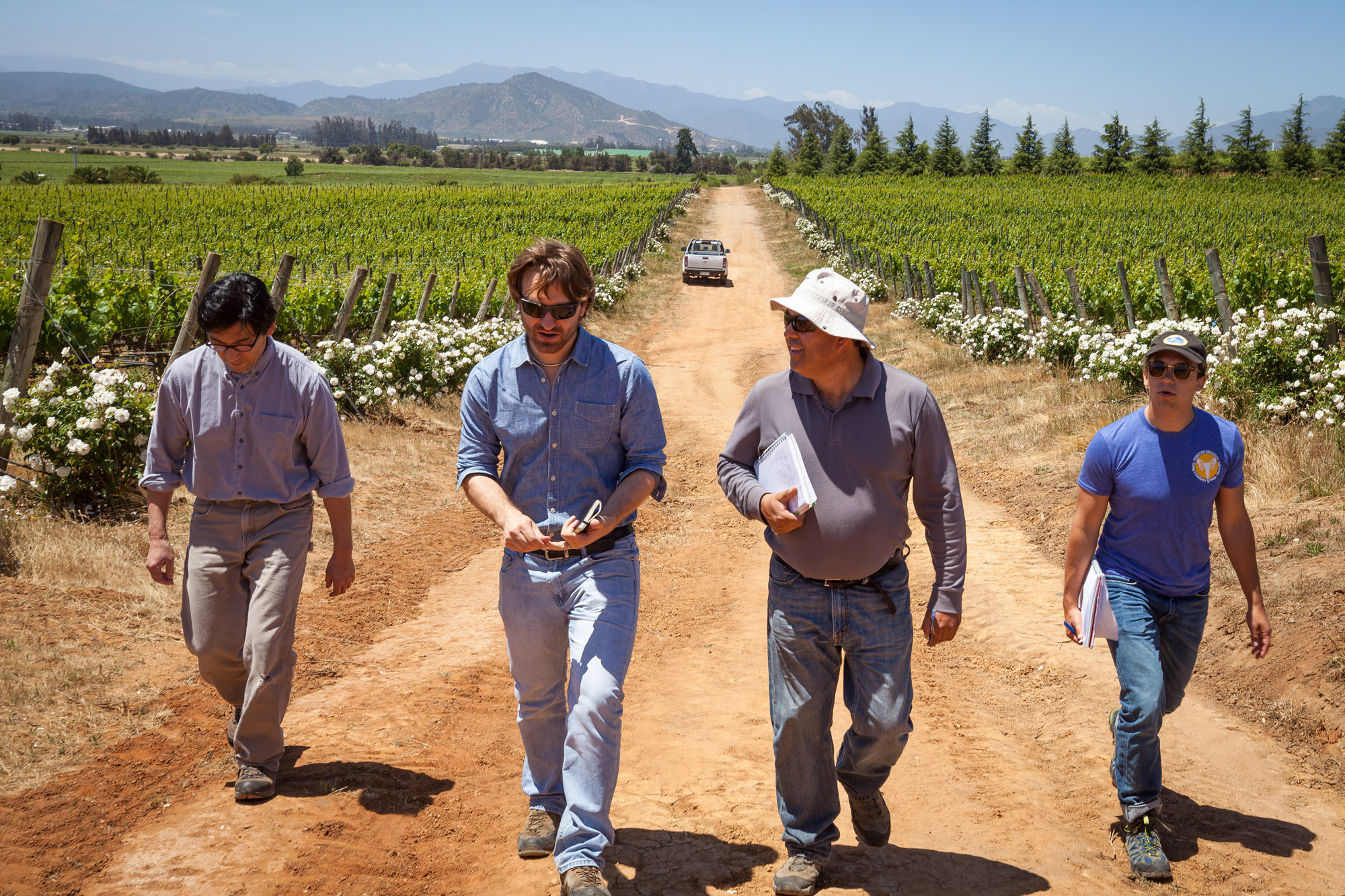 Our winemakers, Byron and Amael walking through the vineyards for an inspection with our vineyard manager Patricio and Ben.