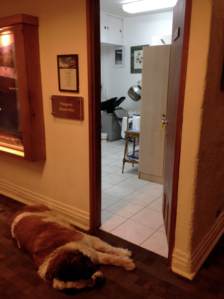 A Saint Bernard snoozes in the hallway outside of the hair salon.