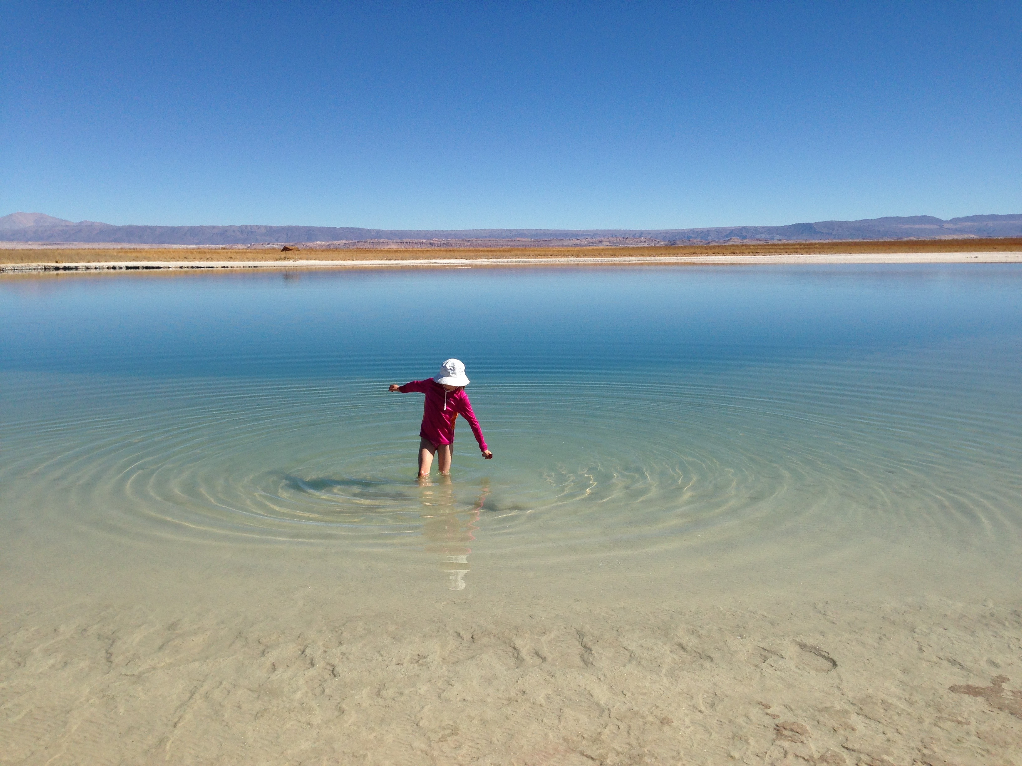 Wading in the salty waters of <em>Laguna Cejar</em>.