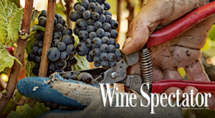 Wine Spectator Harvest report